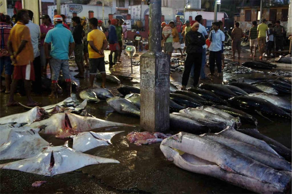 Targ rybny Negombo