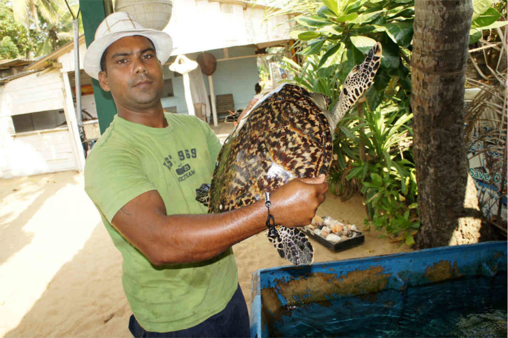 Schronisko żółwi morskich, Sri Lanka