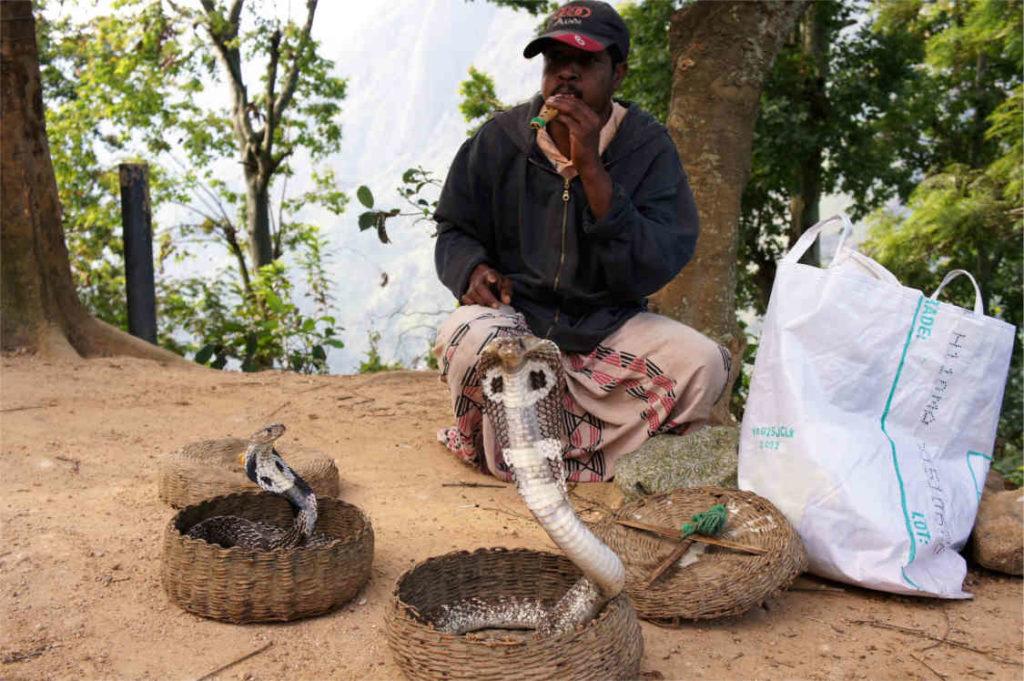 lankijskie kobry, Sri Lanka