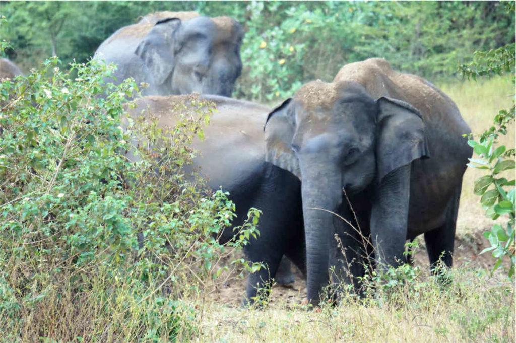 Słonie w Parku Narodowym Udawalewe