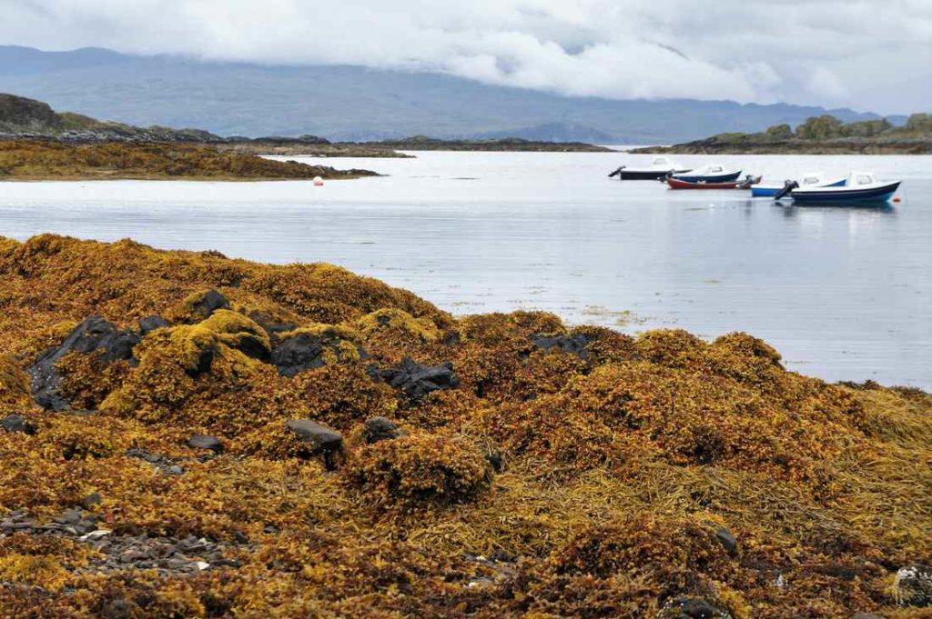 Isle of Skye, Szkocja