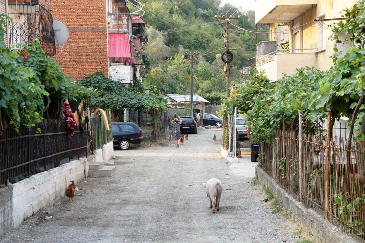 wiejski obrazek - Albania