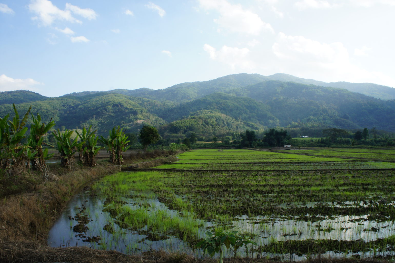 pola ryżowe, Tajlandia północna