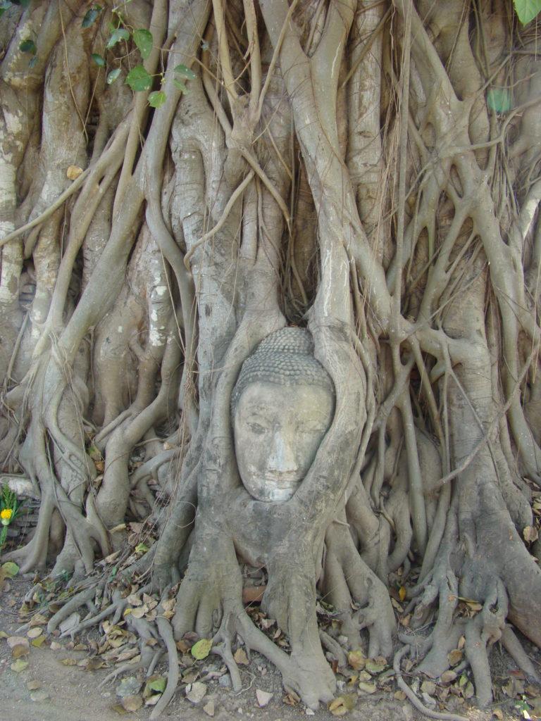 Wizerunek Buddy - Ayutthaya