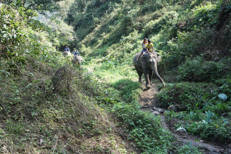 przejażdżka na słoniach, północna Tajlandia
