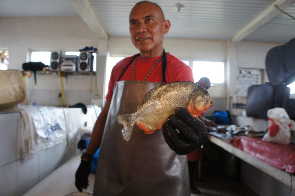 Piranie na straganach w porcie Manaus