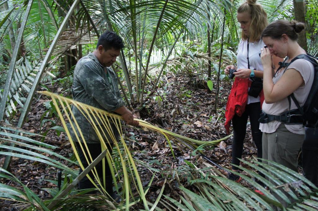 Nauka postaw sztuki przetrwania w dżungli
