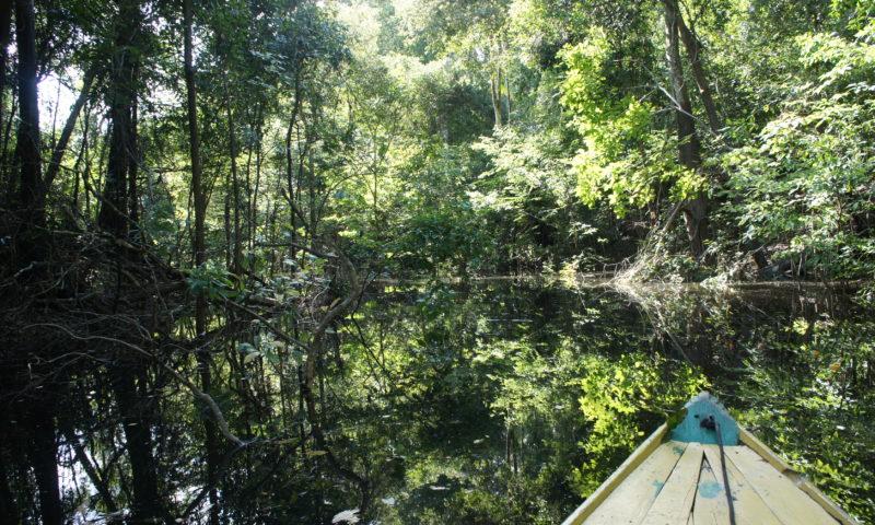 rozlewiska Amazonki