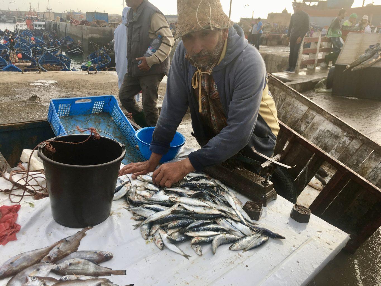 Na targu rybnym w Essaouirze