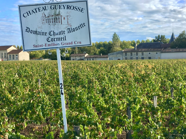 Jedna z wielu winnic w okolicy Bordeaux