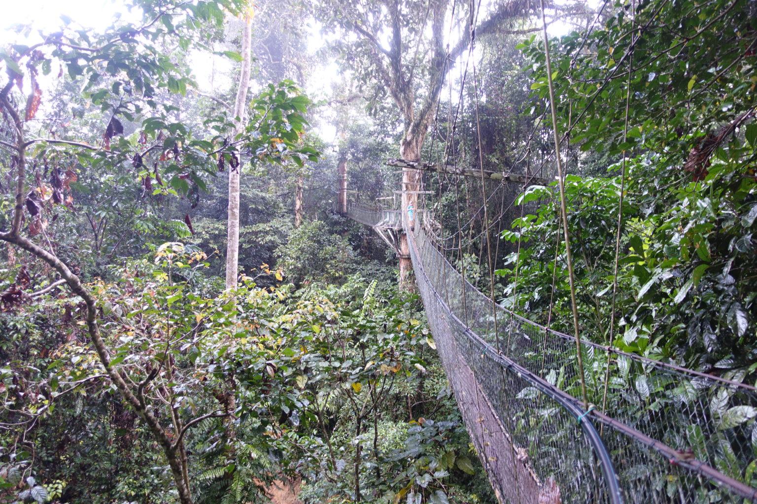 Przejście pomostami zawieszonymi w koronach drzew to punkt obowiązkowy wizyty w Mulu NP