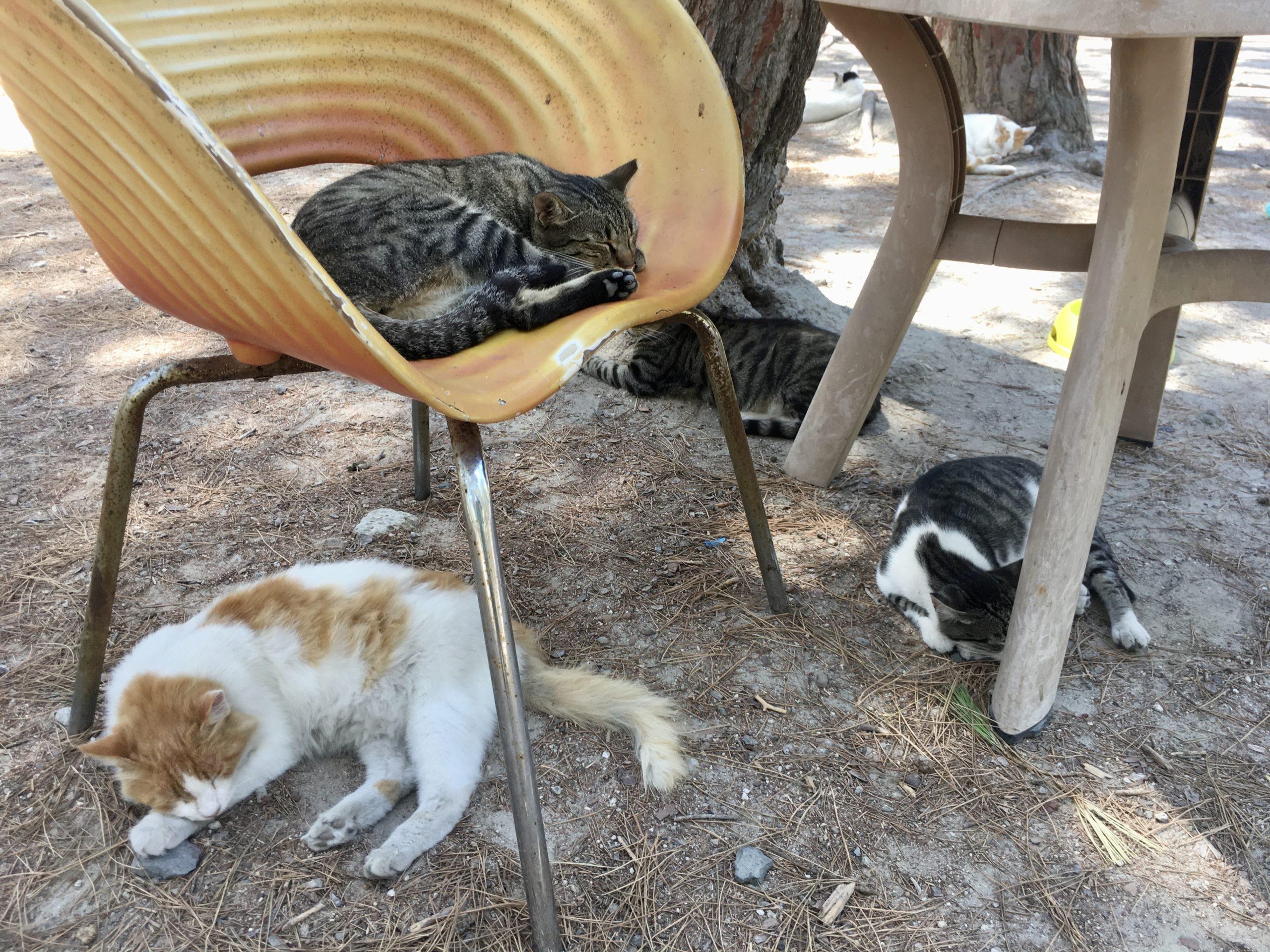 Pawie, koty i żółwie spotkamy w Lesie Plaka