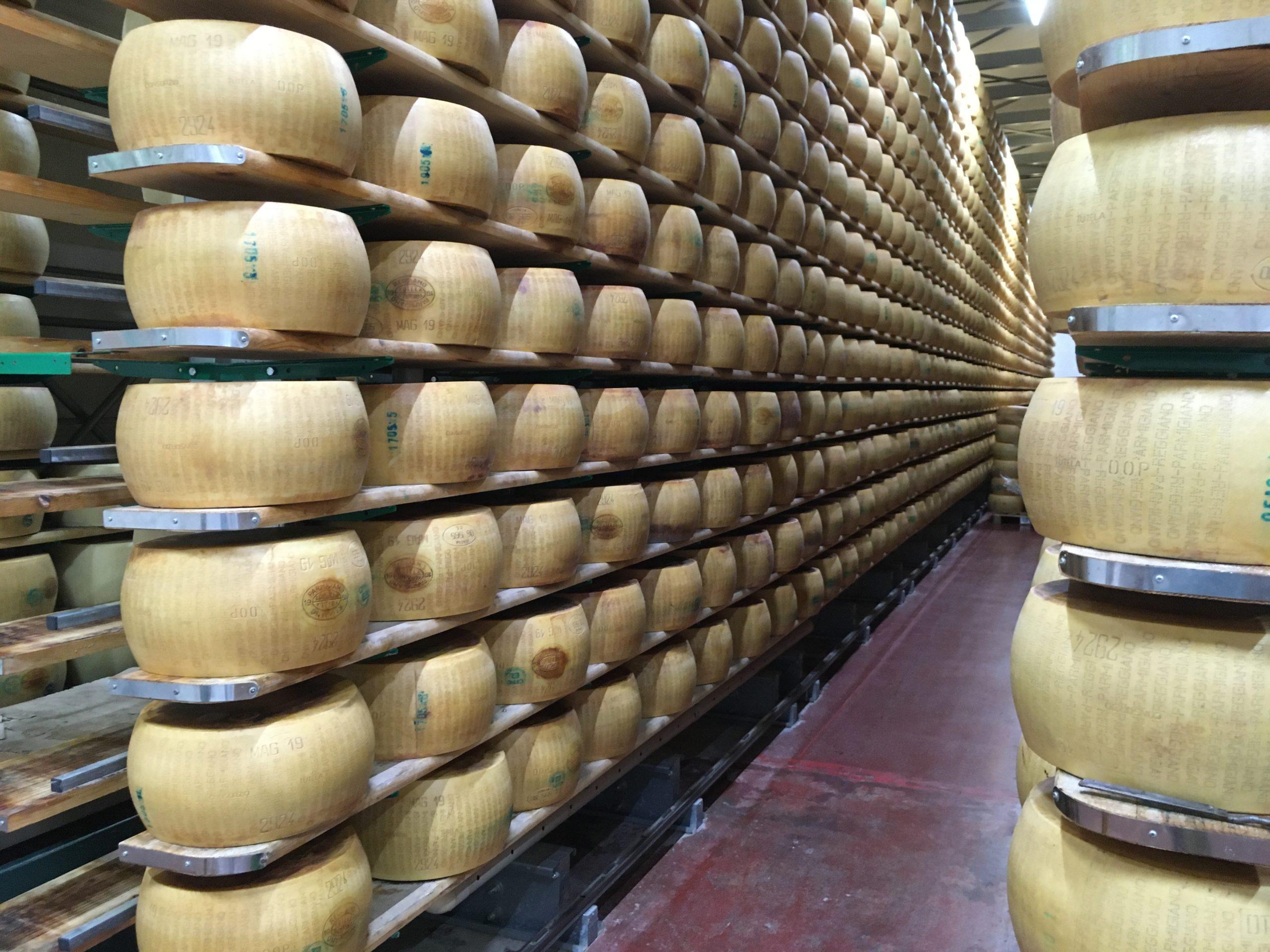 """Farma """"Hombre"""" produkuje 16 kręgów Parmigiano Reggiano dziennie"""