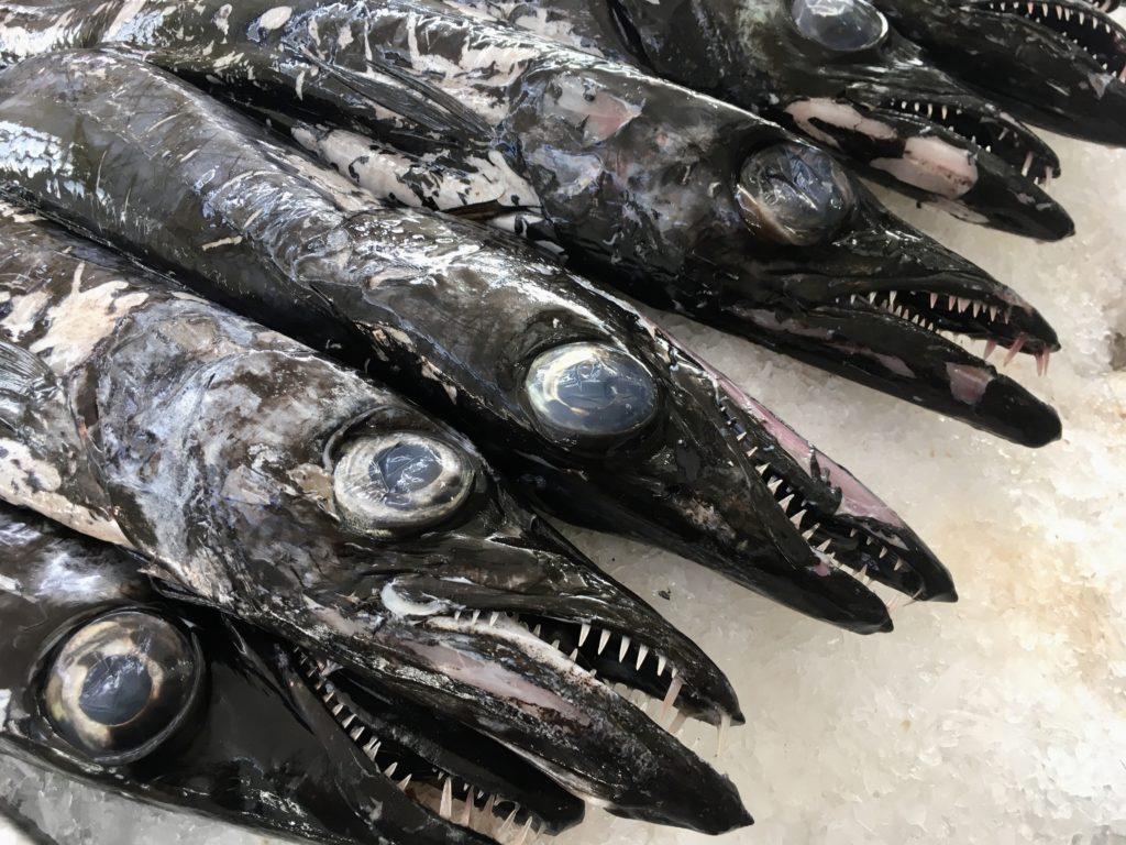 Espada żyje w głębinach wokół Madery