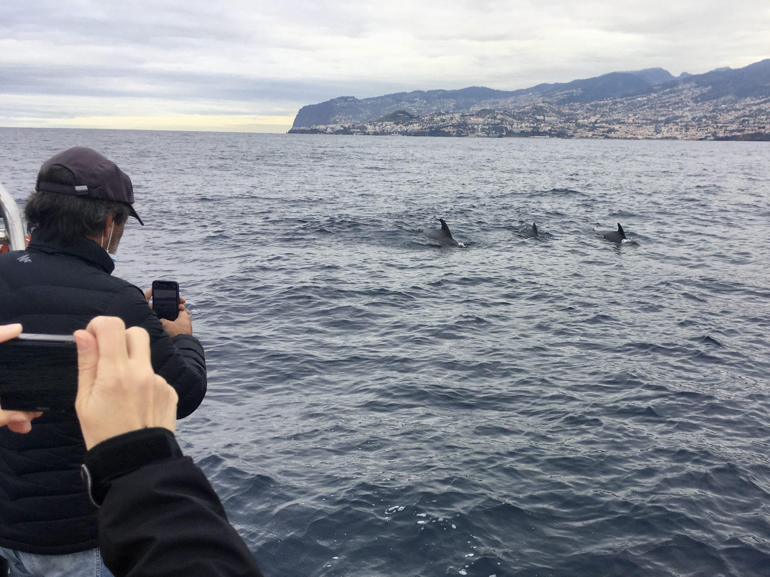 Delfiny można obserwować naprawdę z bliska